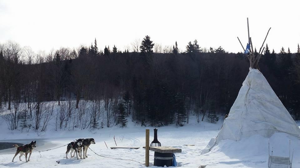 Québec_Canada_nature_neige_traineaux-chiens